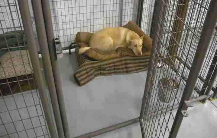 Dog resting in kennel